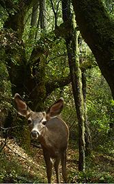 Deer peering into a camera