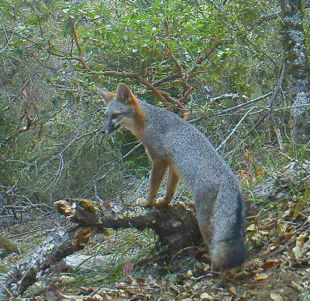 WPIP fox mt tam